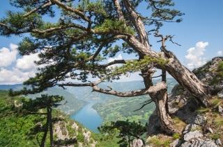 Serbien: Der magische Berg Tara